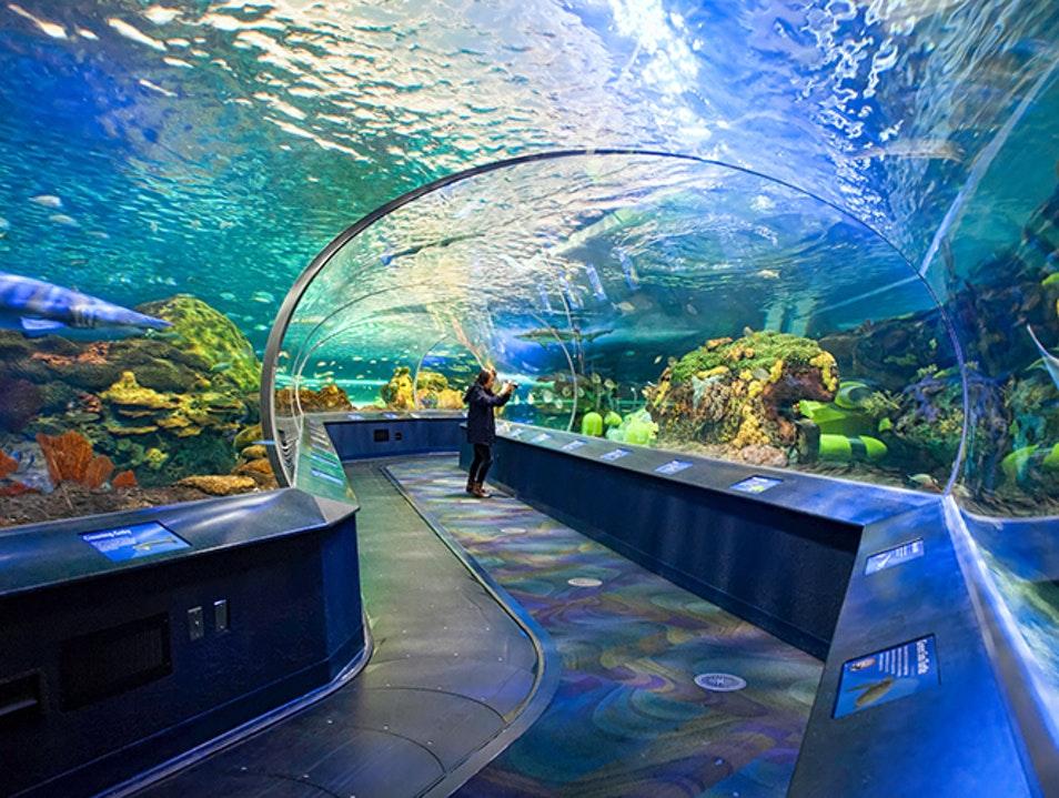 Ripley's Aquarium of Canada   Toronto   Canada   AFAR